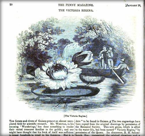1838年报纸上刊登的王莲图画.jpg