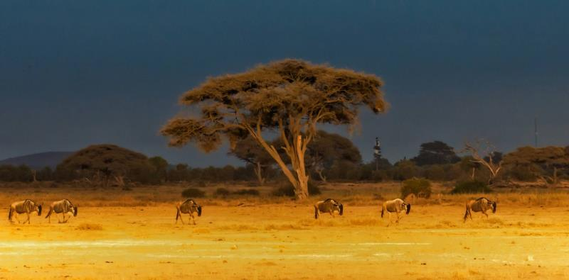 东非大草原    肯尼亚.jpg
