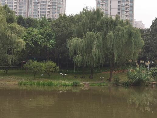 徐家汇公园天鹅新拍01.jpg