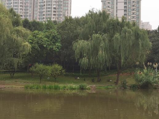 徐家汇公园天鹅新拍02.jpg