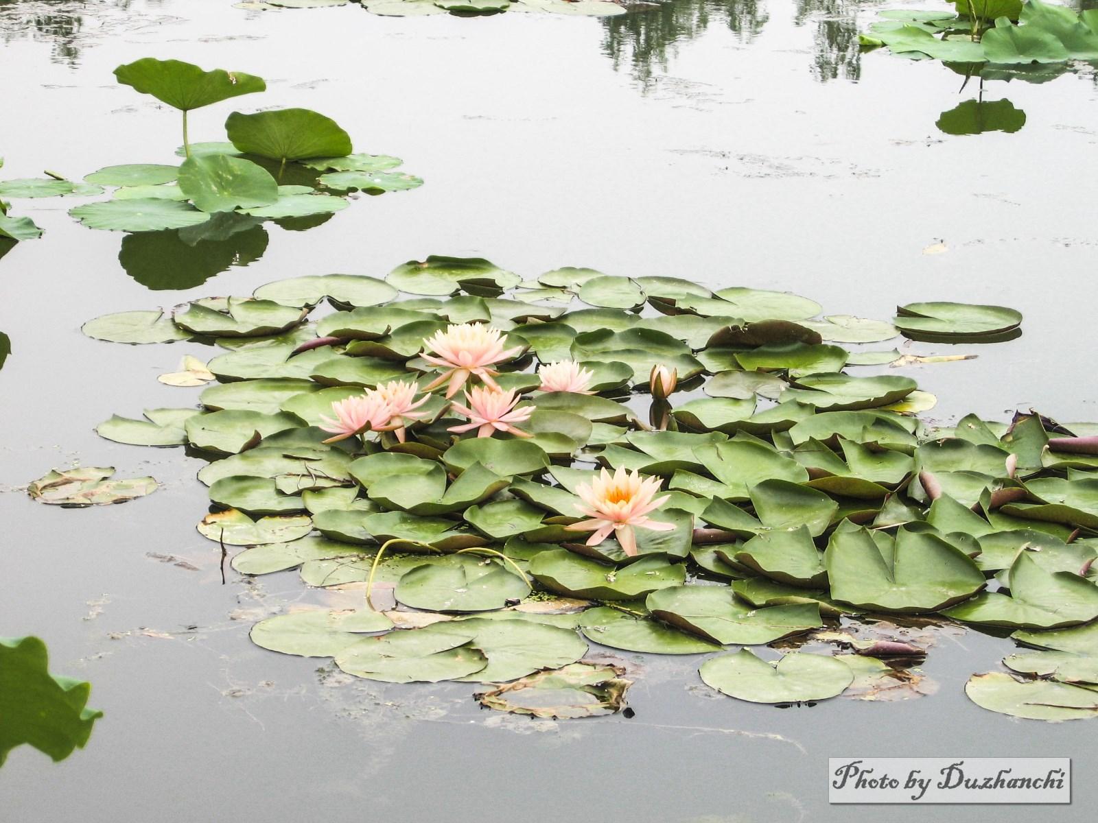 2北京植物园 015 (27)_1-1.jpg