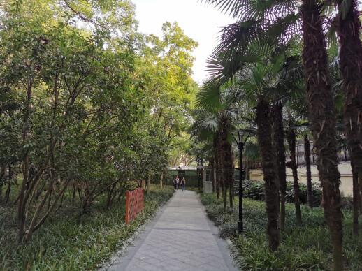 衡山公园重游新拍06.jpg