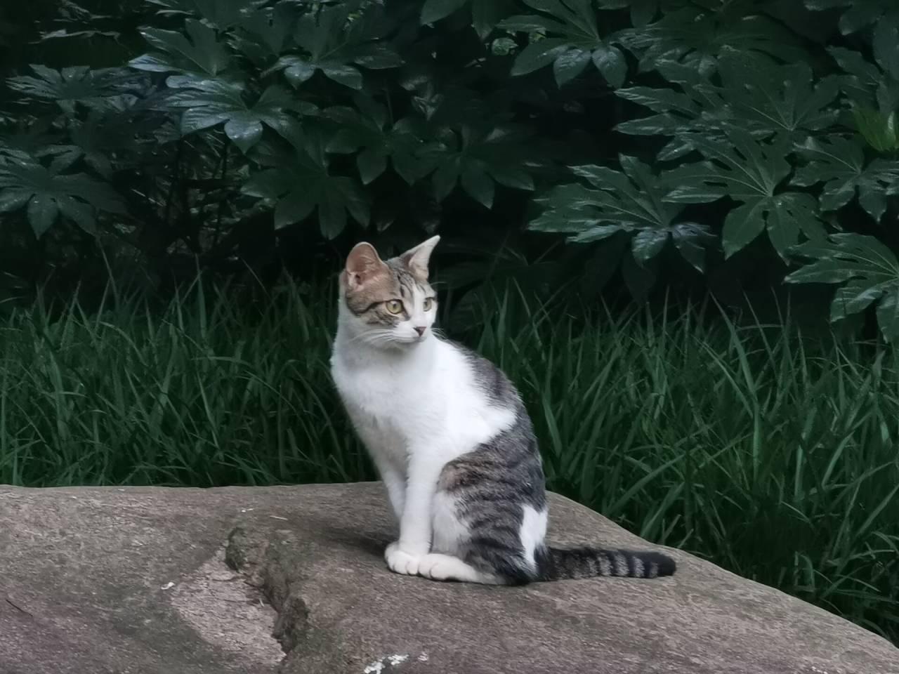 哲猫苏格拉底1.jpg