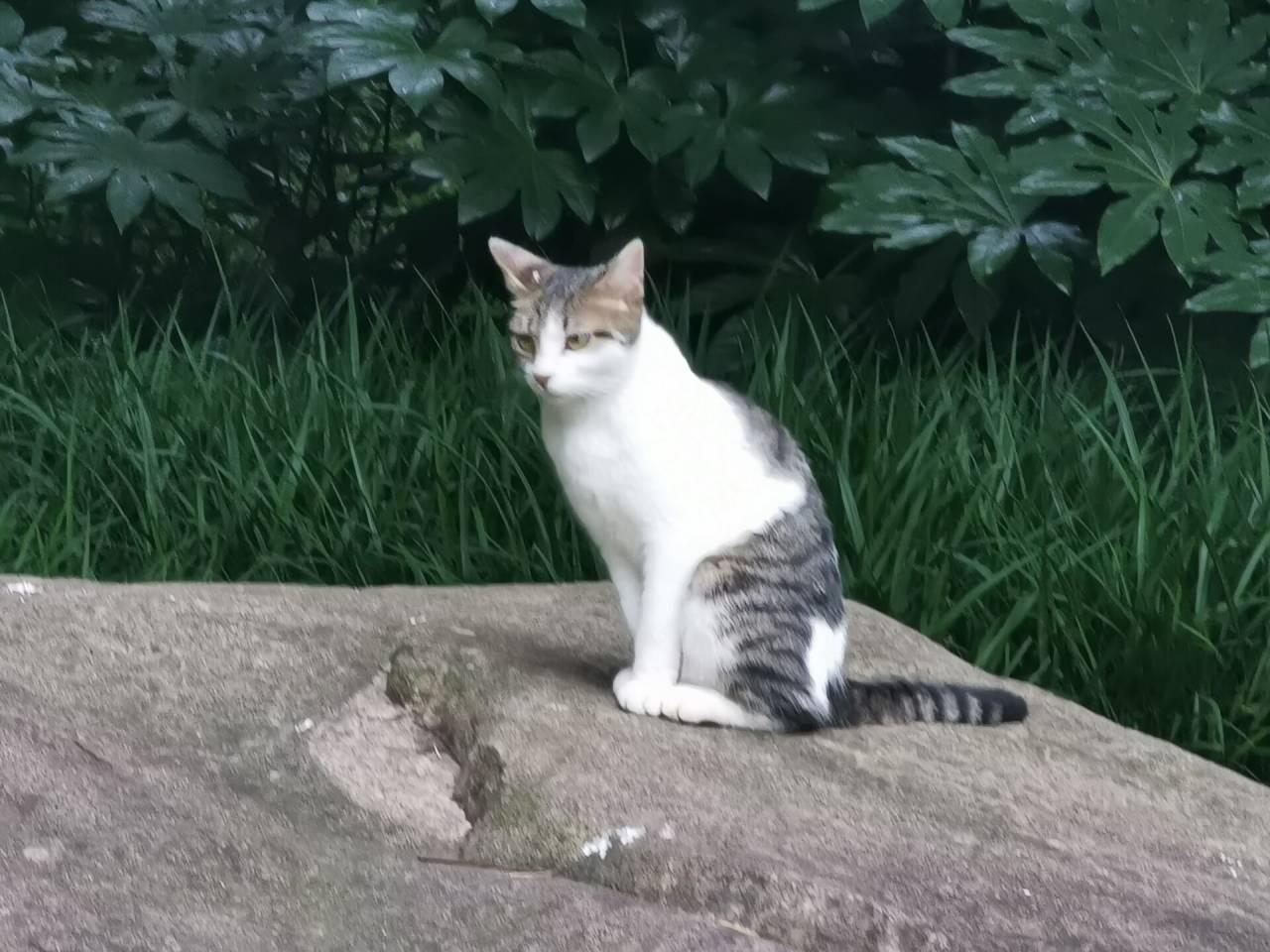 哲猫苏格拉底2.jpg