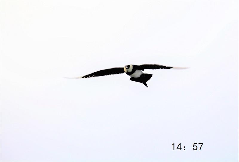 照片6IMG 022 - 副本.jpg