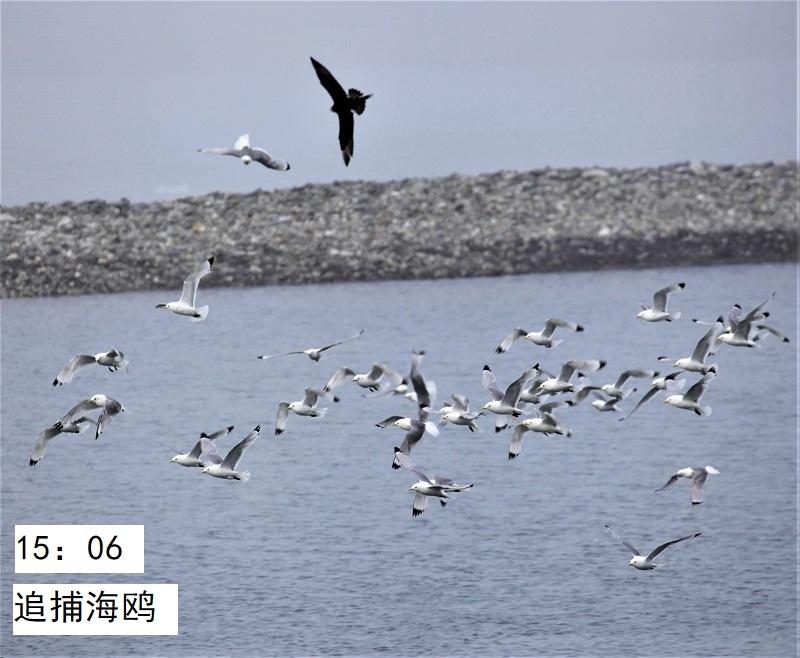 照片14IMG 165 - 副本.jpg