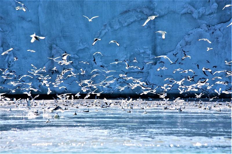001紧邻冰山 海鸥家园 - 副本.jpg