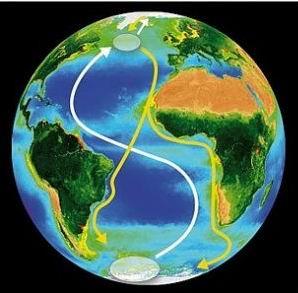 图1北极燕鸥往返南北极路线示意图.jpg