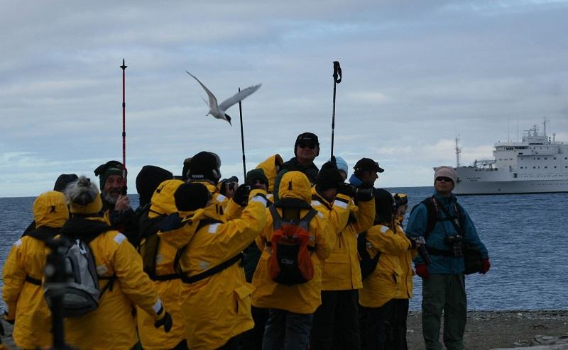 照片4避免北极燕鸥攻击的办法 - 副本.jpg