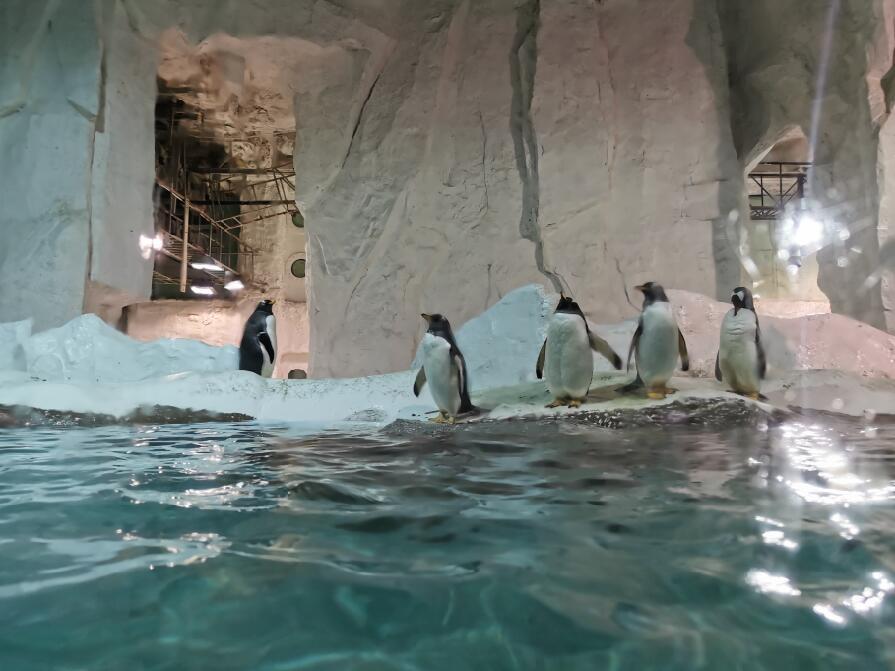 大连圣亚海洋世界:企鹅01.jpg