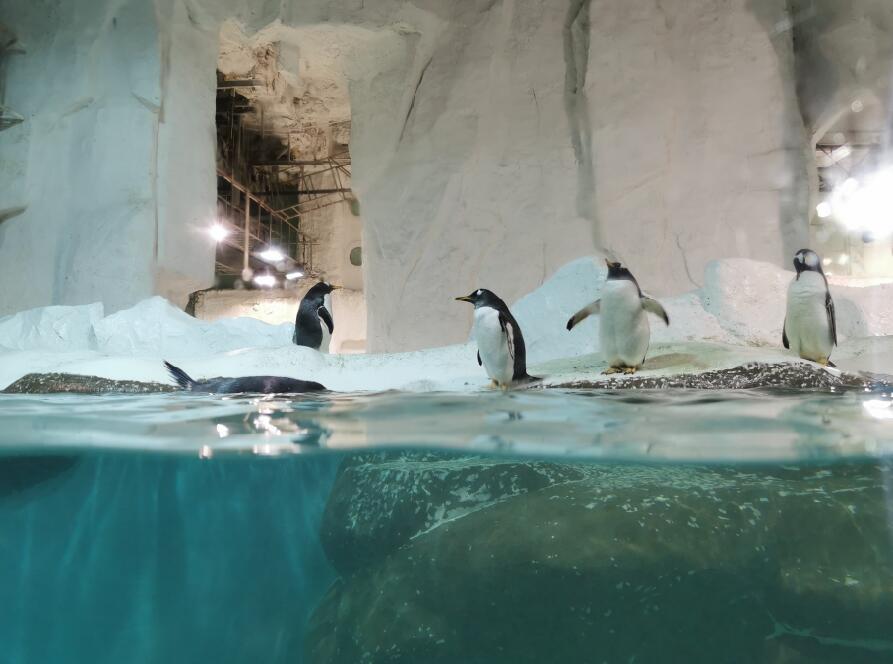 大连圣亚海洋世界:企鹅02.jpg