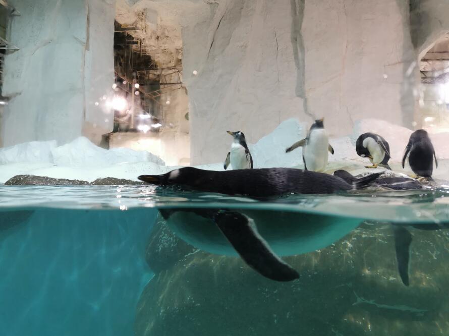 大连圣亚海洋世界:企鹅03.jpg