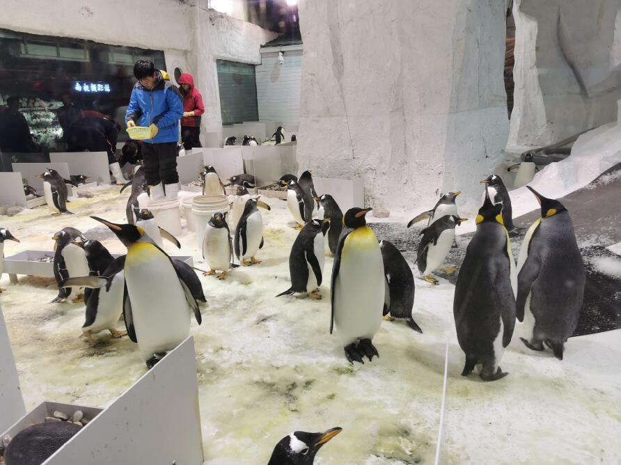 大连圣亚海洋世界:企鹅04.jpg