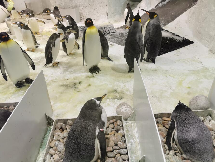 大连圣亚海洋世界:企鹅05.jpg