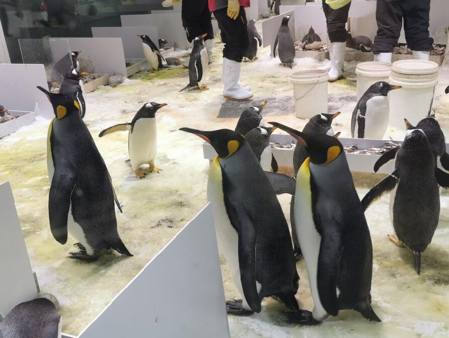 大连圣亚海洋世界:企鹅06.jpg
