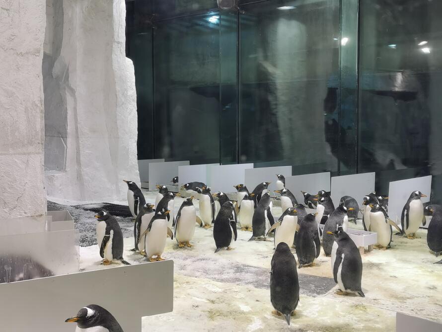 大连圣亚海洋世界:企鹅07.jpg