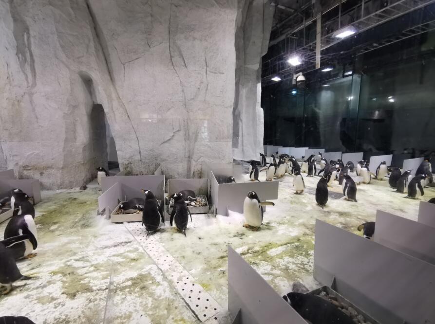 大连圣亚海洋世界:企鹅08.jpg