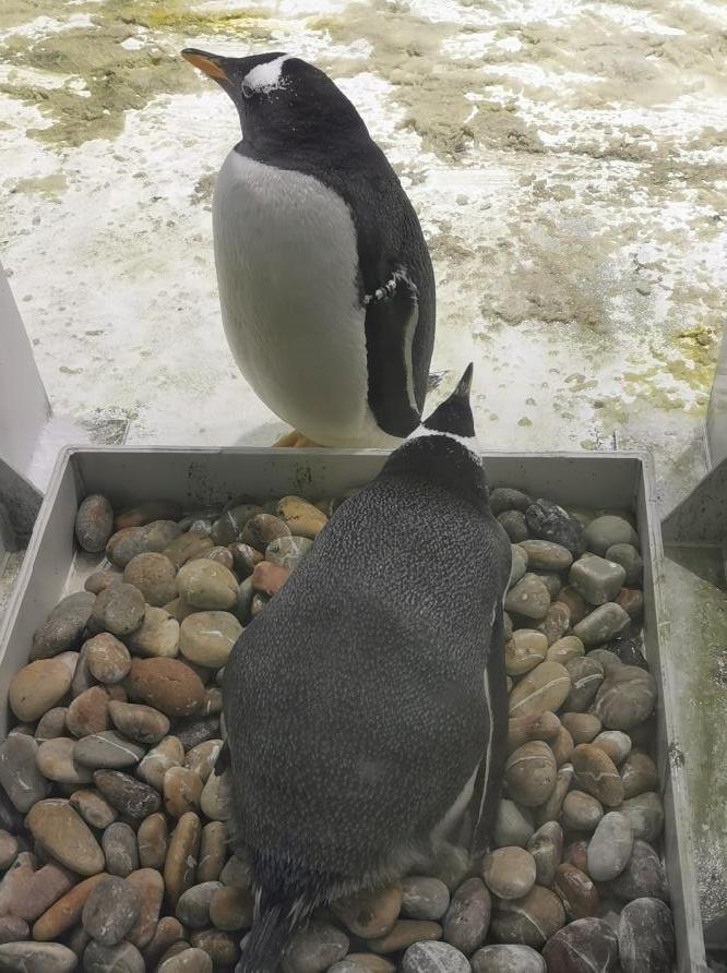 大连圣亚海洋世界:企鹅09.jpg