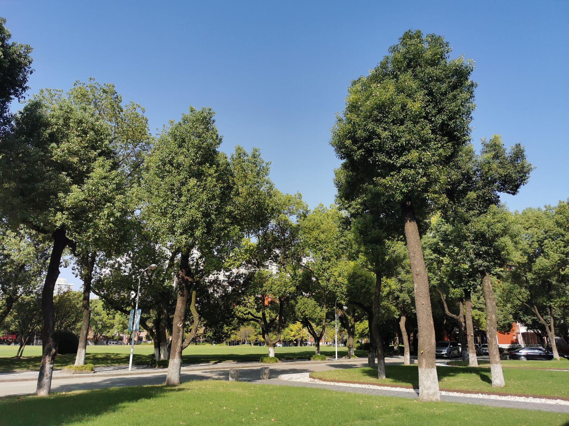 上海大学延长校区重游新拍4.jpg