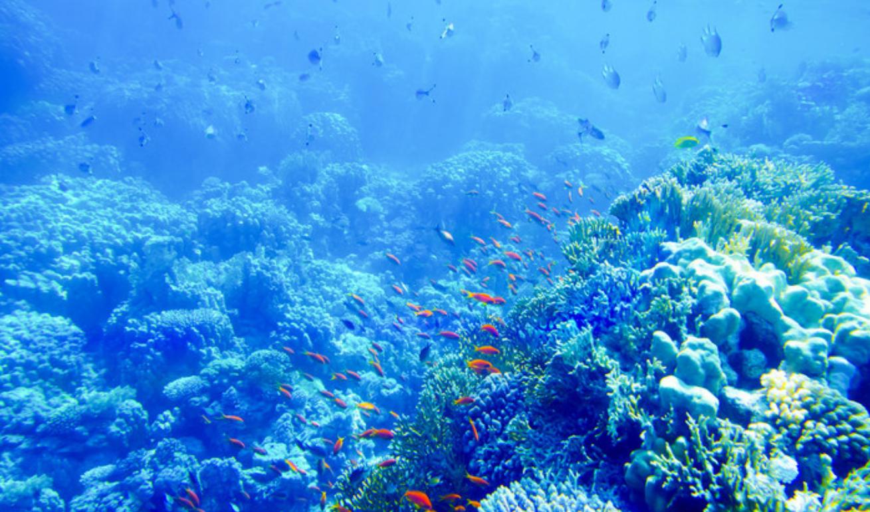 海洋.png