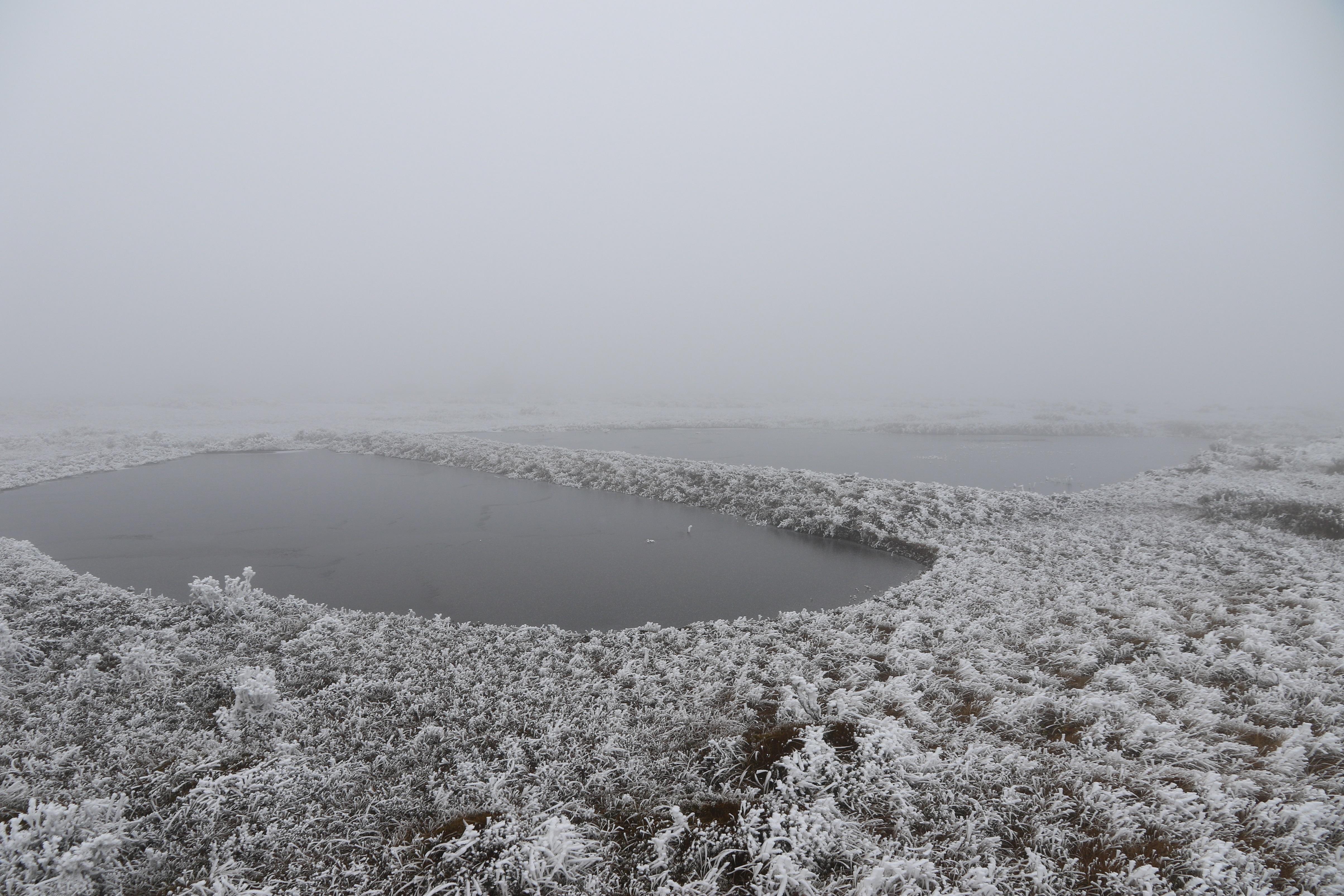 2 寻甸越冬的黑颈鹤就栖息在雾凇里的沼泽湿地 白皓天 摄.jpg