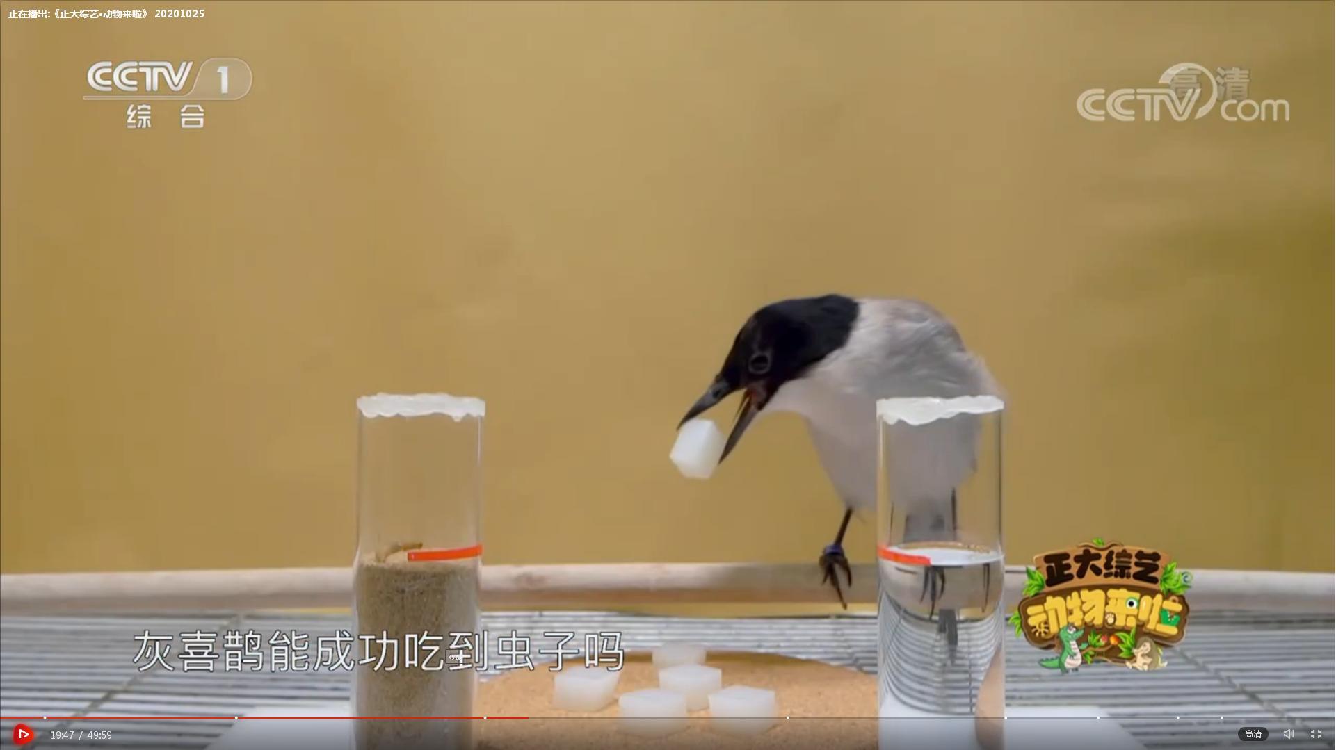 张宜贵 第一关 沙子与水 测试灰喜鹊吃虫子.JPG