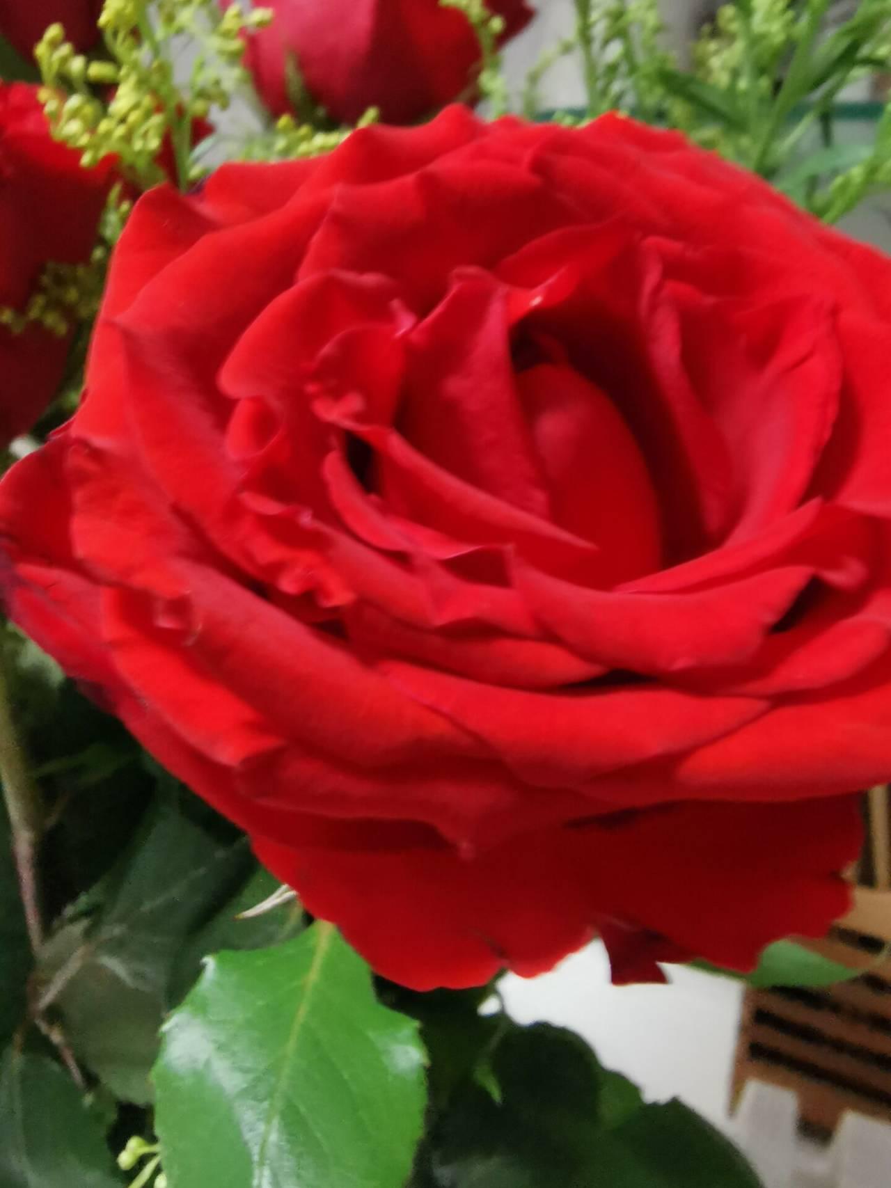 看花老眼之瓶中玫瑰2.jpg