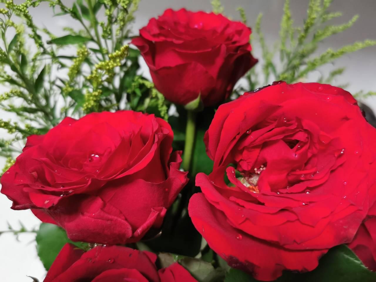 看花老眼之瓶中玫瑰4.jpg