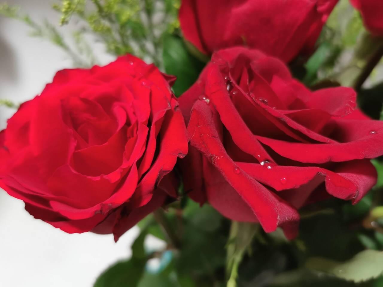 看花老眼之瓶中玫瑰5.jpg
