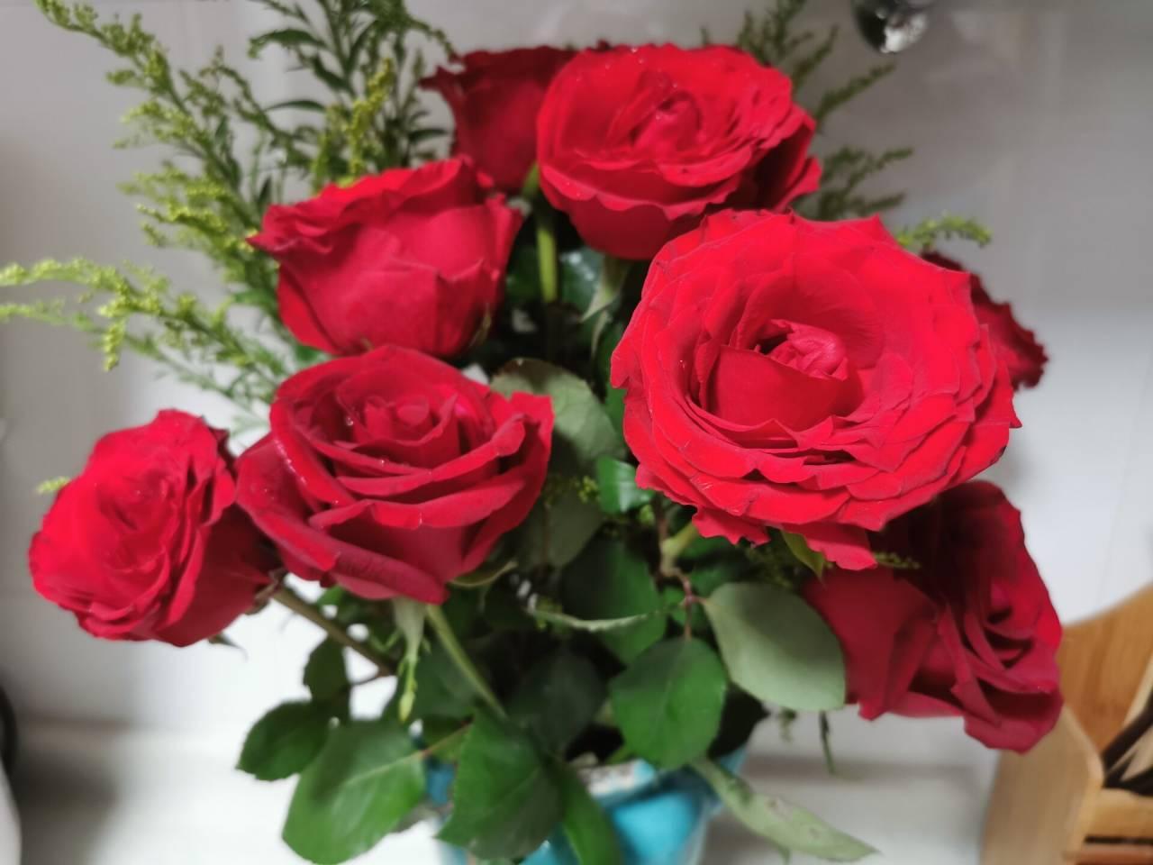 看花老眼之瓶中玫瑰7.jpg
