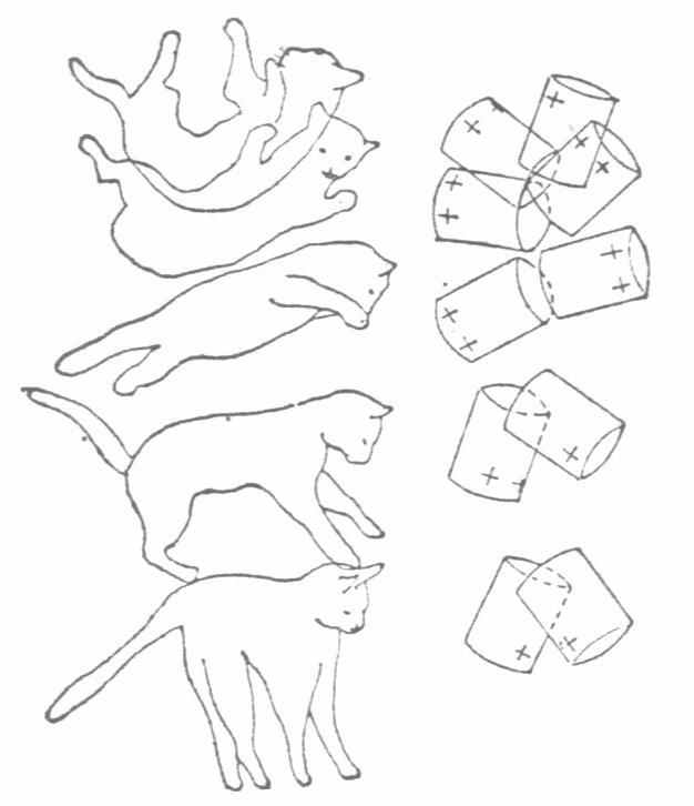 猫转体.jpg