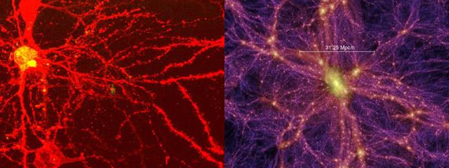 brain_universe.jpg