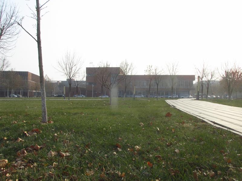 第三代牛顿苹果树(2020秋,北洋园) 03 IMG_5601_副本.jpg