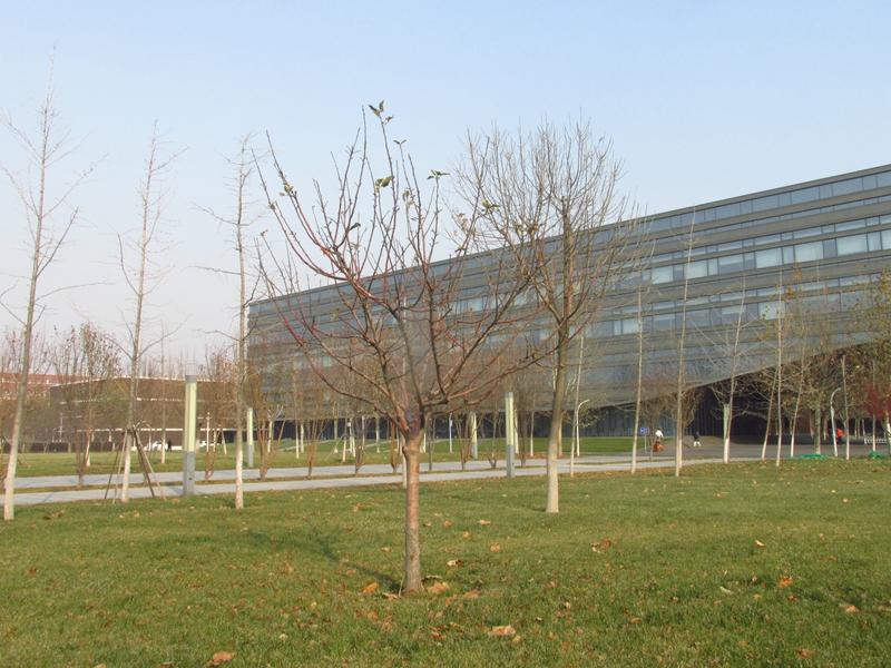 第三代牛顿苹果树(2020秋,北洋园) 07 IMG_5621_副本.jpg