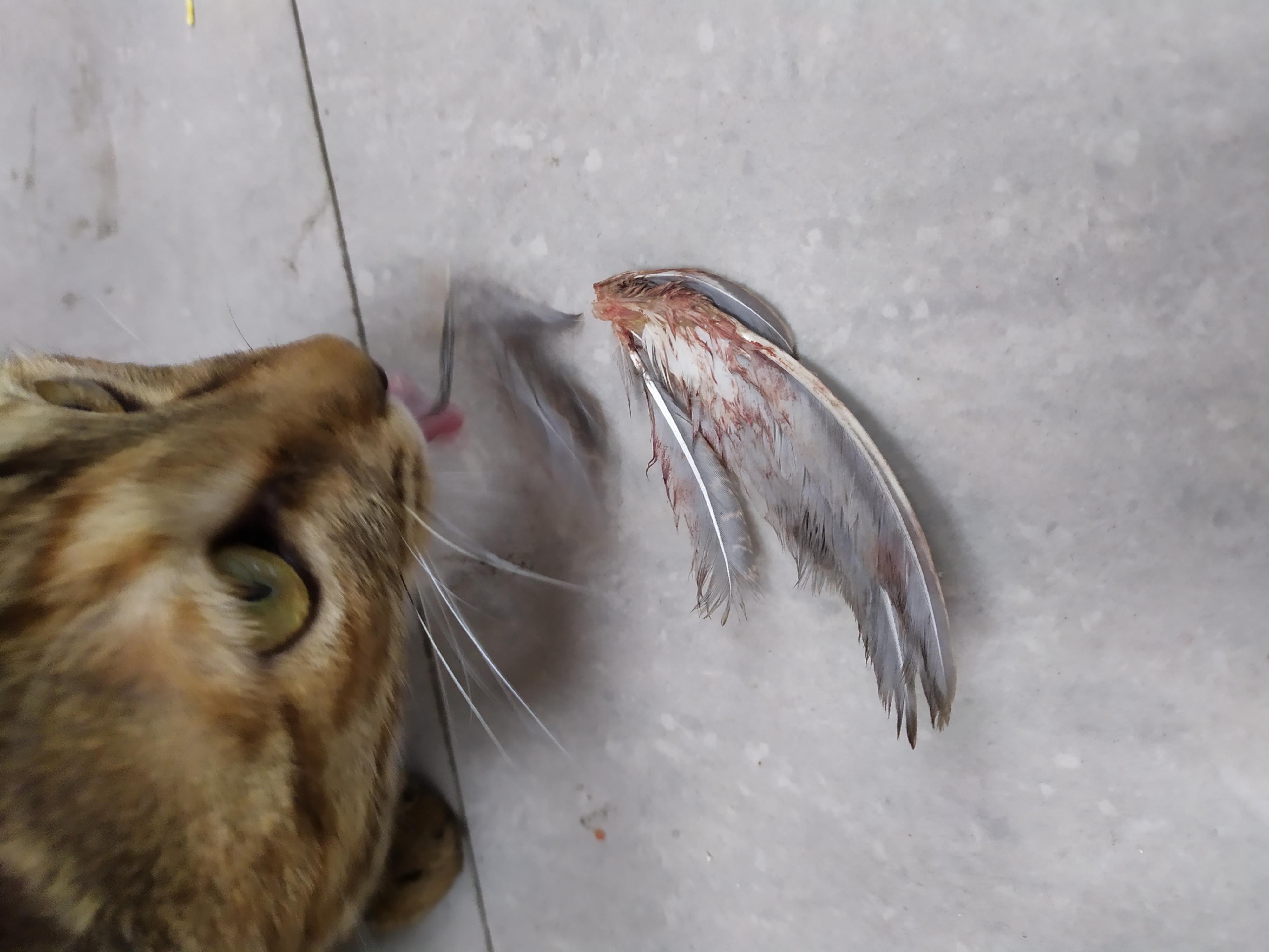 流浪猫捕食麻雀-张振伟.jpg