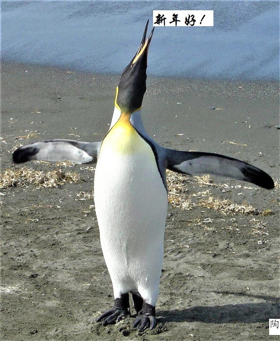 007企鹅仰天引亢高歌,双翅尽可能张开,保持平衡 - 副本.jpg