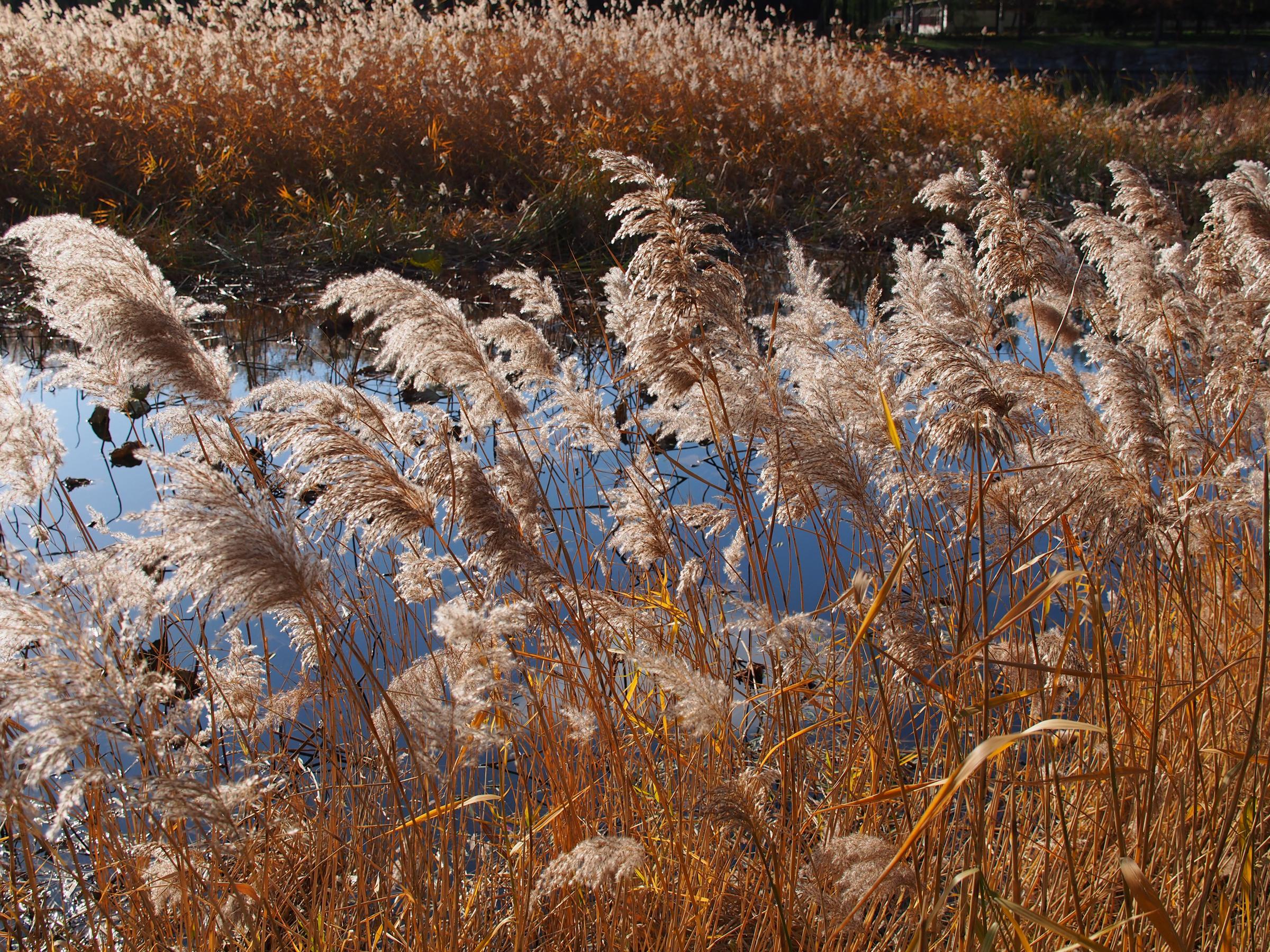 src=http___www.soomal.com_images_doc_20121119_00024678.jpg&refer=http___www.soomal.jpg