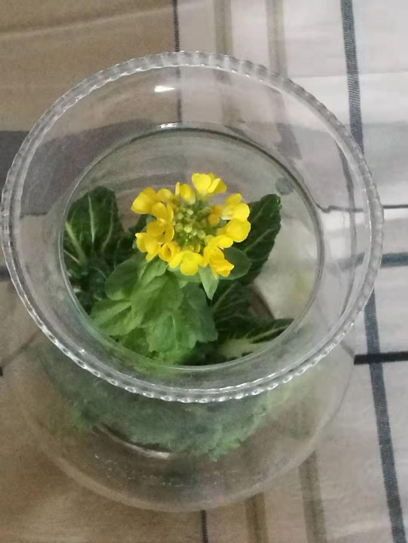 白菜花1.jpg