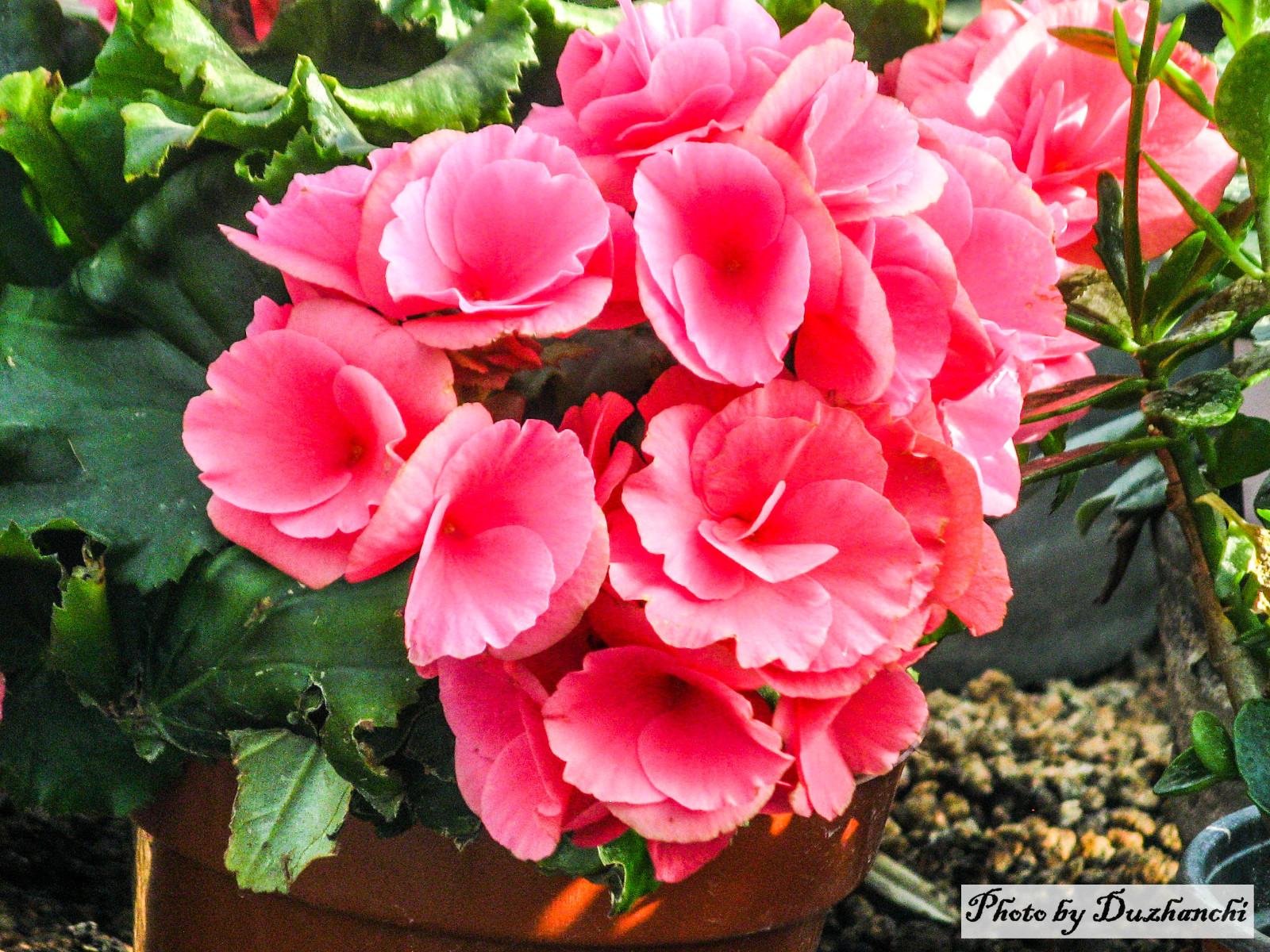 IMG_4450植物所_1-1.JPG