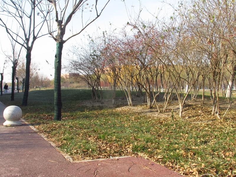 海棠与金银木树随拍 08 IMG_5795_副本.jpg
