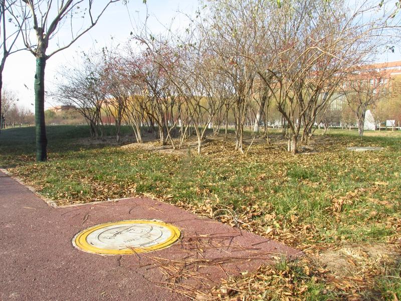 海棠与金银木树随拍 09 IMG_5799_副本.jpg