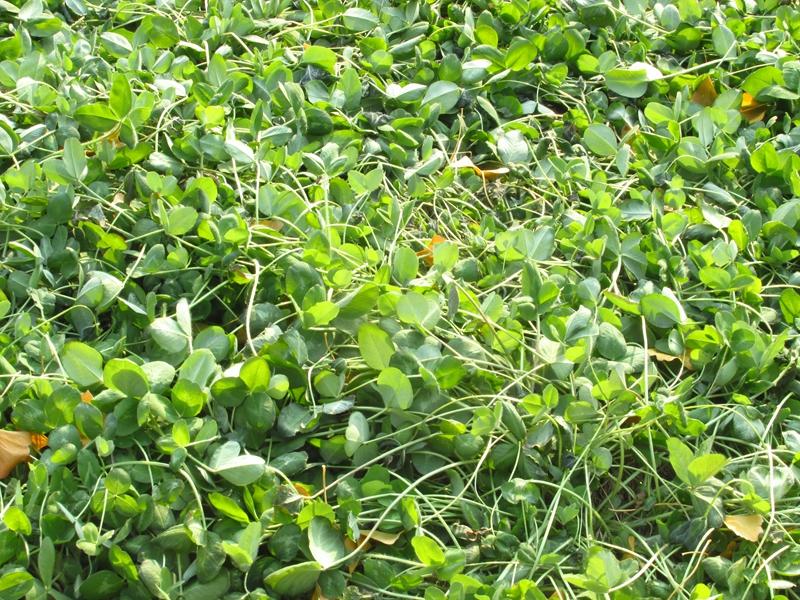 绿色植物杂拍 07 IMG_5562_副本.jpg