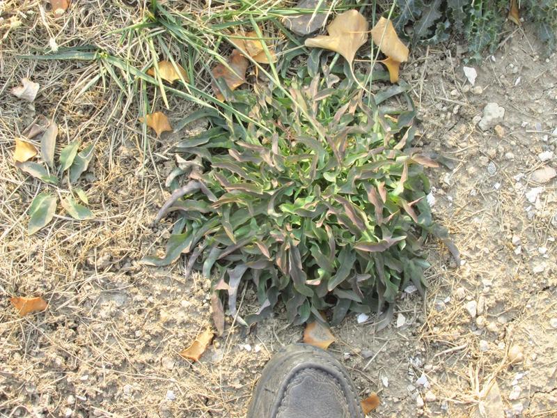 绿色植物杂拍 08 IMG_5545_副本.jpg