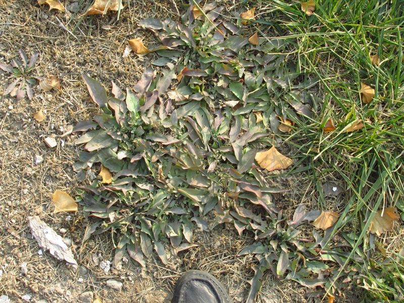 绿色植物杂拍 10 IMG_5552_副本.jpg