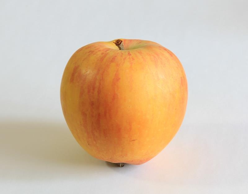 牛顿苹果(天津大学,第二代)2020年.jpg