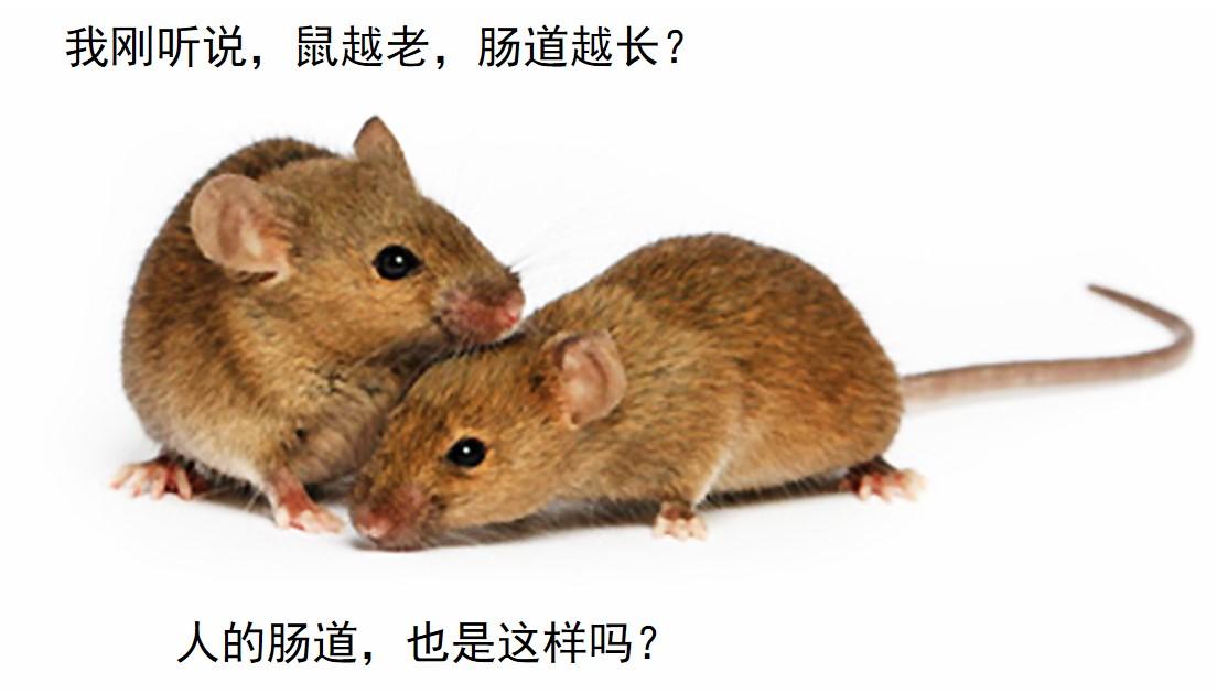 mice_1.jpg