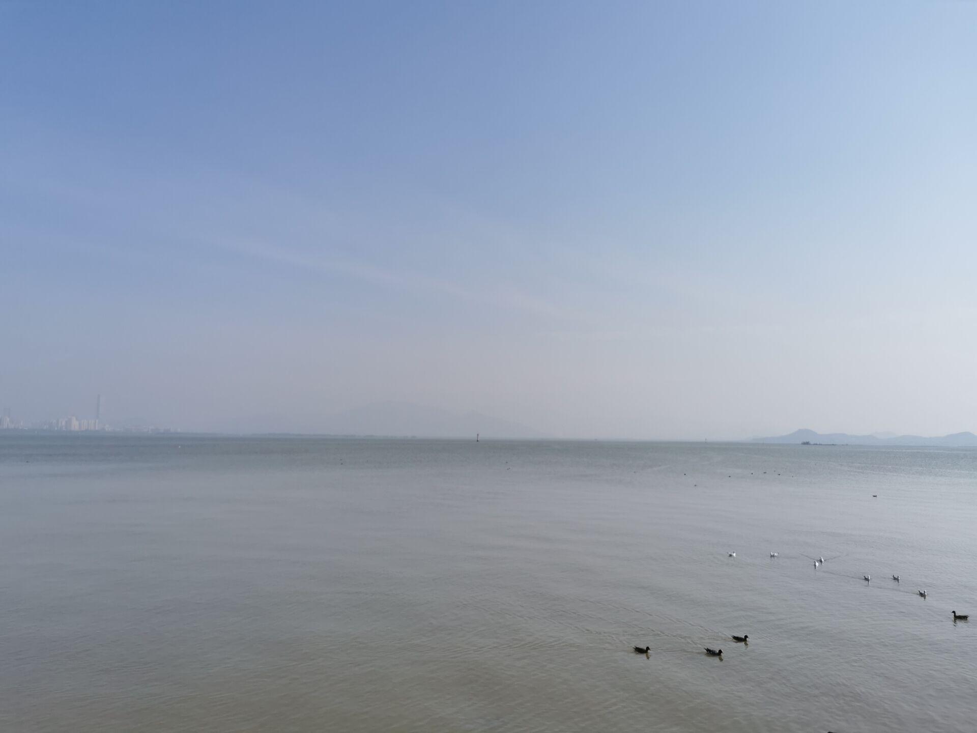 深圳湾海鸟1.jpg