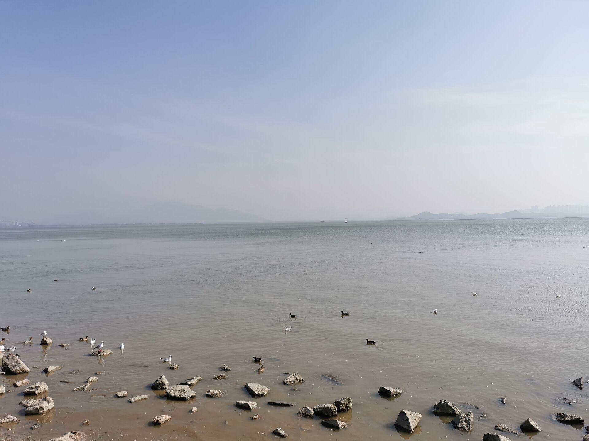 深圳湾海鸟2.jpg