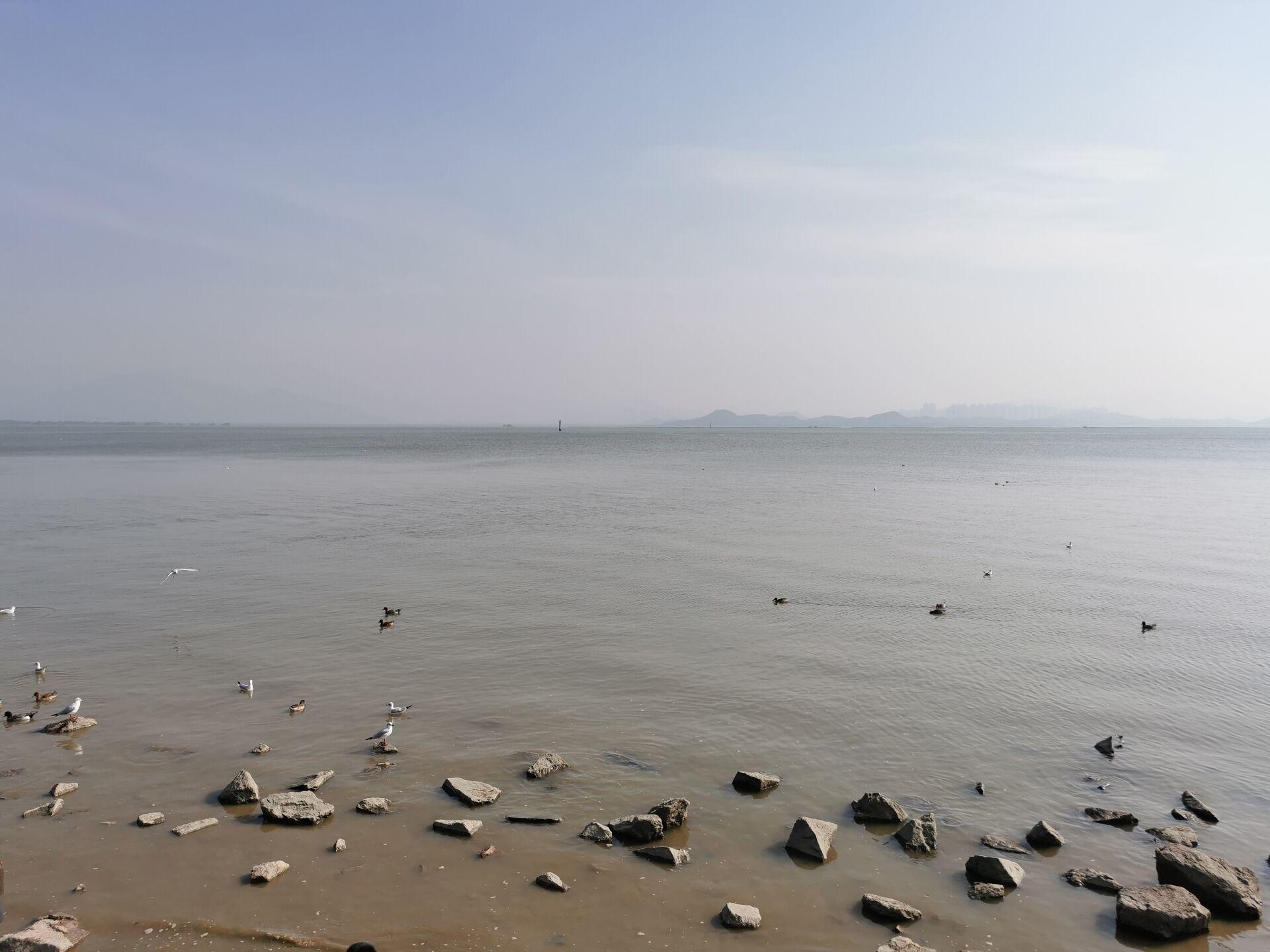 深圳湾海鸟3.jpg