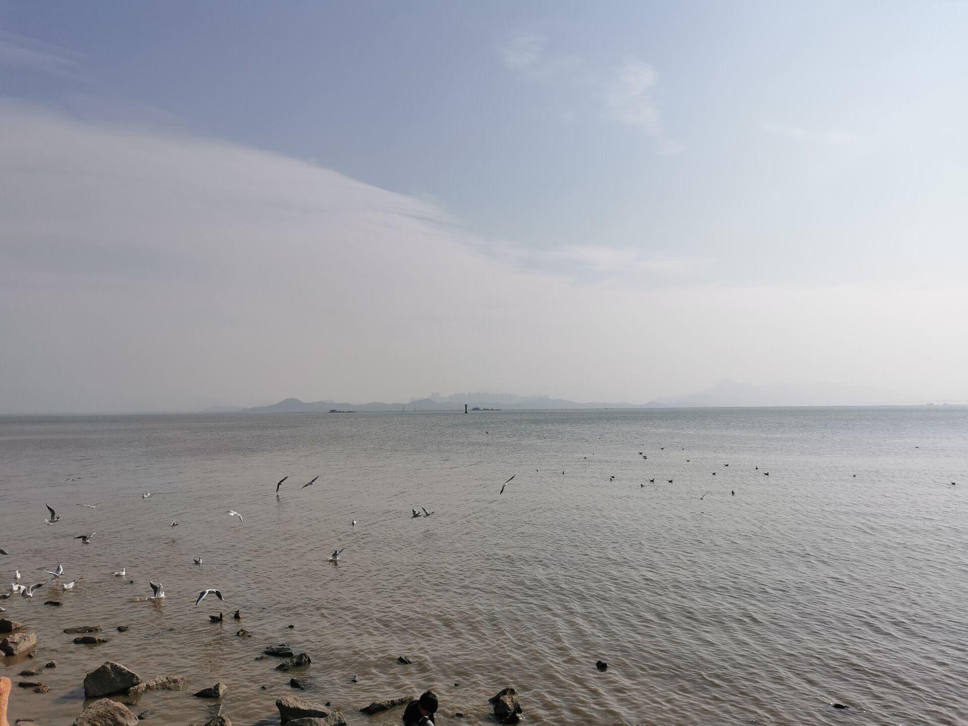 深圳湾海鸟5.jpg